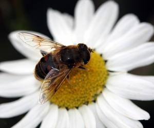 O pčelarstvu u Starčevu