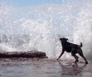 Pančevo u vodi (do guše)