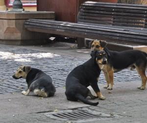 Sve više napuštenih pasa na ulicama