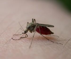 Gradska uprava: Komarci prskani više puta