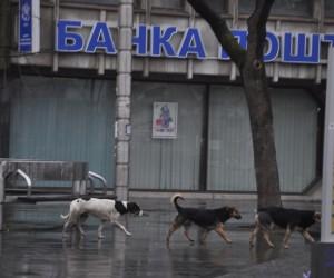 I dalje mnogo pasa na ulicama