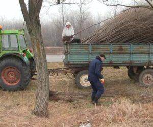 (VIDEO) Nastavljena akcija sadnje na putu Kovačica – Padina