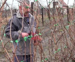 (VIDEO) Specifičnost Banatskog vinogorja